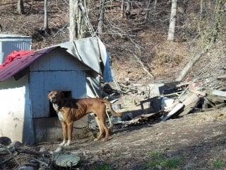 Courtesy: Humane Society of the U.S.