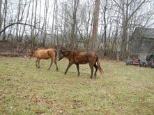 Horses in February 2013/Courtesy: Harrison County 911