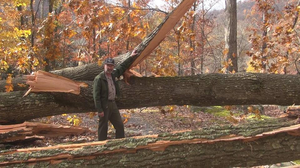 Valley Falls State Park Superintendent, Ronald Fawcett, next to an 80 foot tree toppled over from the storm.